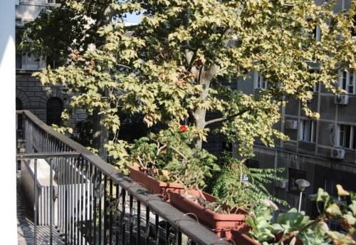 Apartmani Beograd | Apartman A41 | Strogi centar - Pogled sa terase
